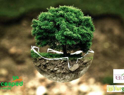 Planta en Verde. 100m2 ♻️ 1 árbol